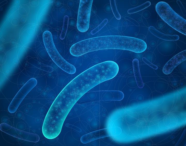 microbiotiques de la cavité buccale